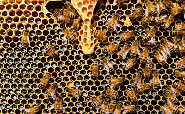 Mit csinálnak most a méhek