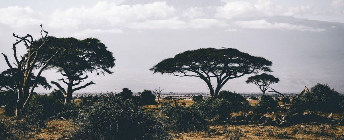 Férfiak, nők és gyermekek Afrikában